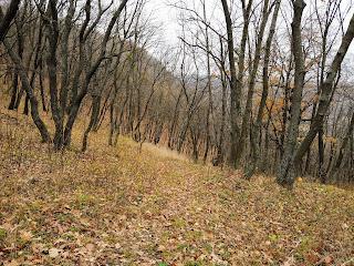 Святогорск. Лесные массивы на меловых горах