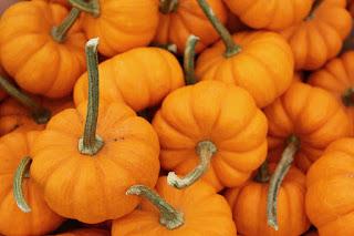 Pomarańczowa dynia