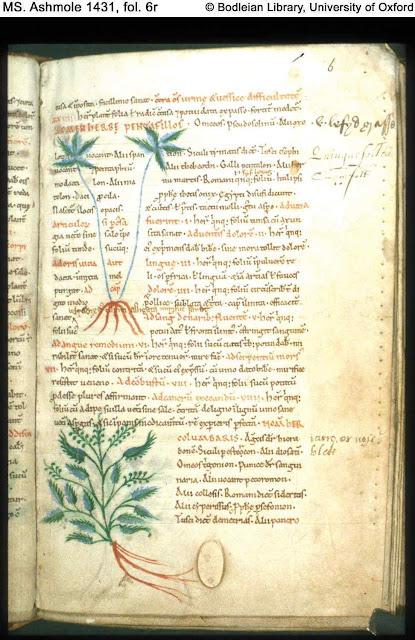 Pentafillos (Cinquefoil) e Columbaris (Vervena) Pseudo-Apuleius Herbal, século XI, Bodleian MS Ashmole 1431, fol. 6r