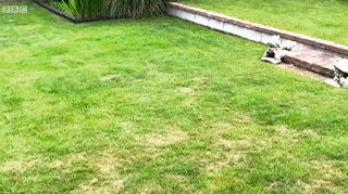lawn problem