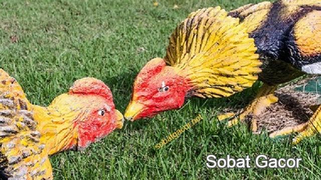 Ayam Aduan Wiring Kuning