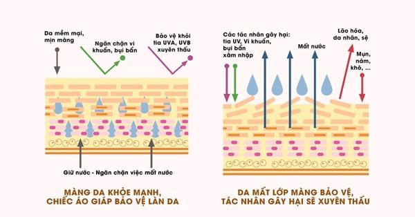 Niacinamide là giúp bổ sung và kích thích sản sinh ceramide giúp bảo vệ da.
