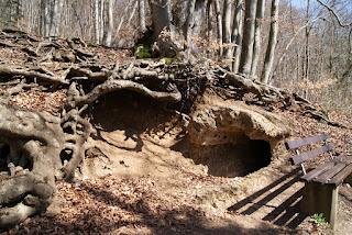 Der Römerkanal verläuft unter den Wurzeln eines anderen Baumes entlang.