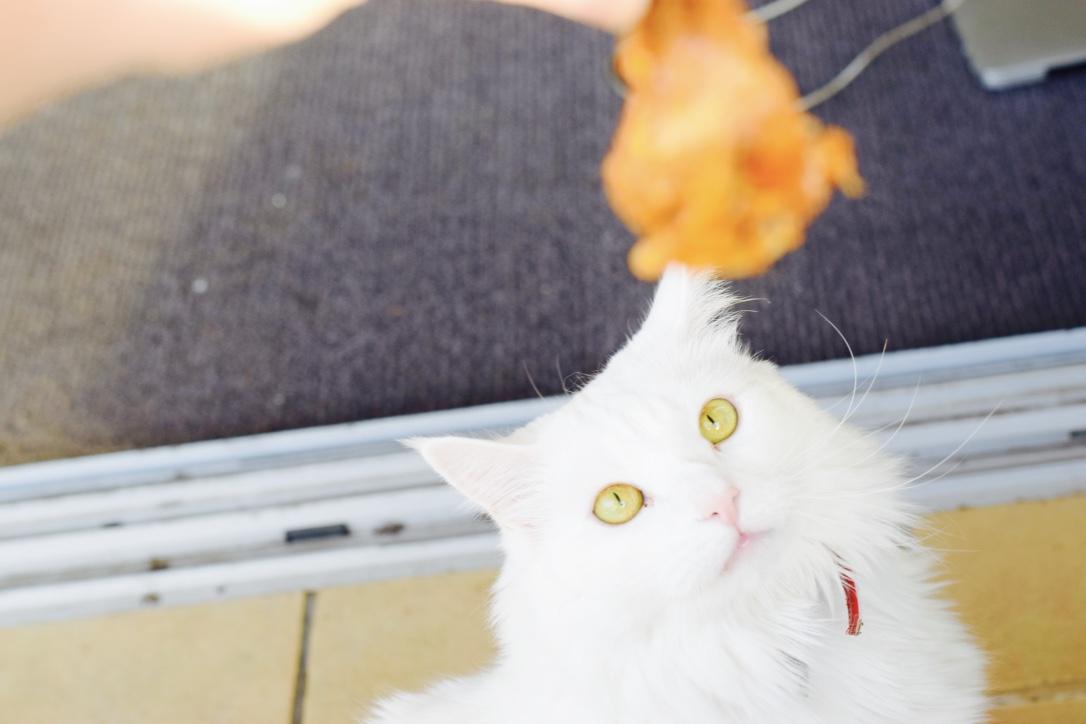 Dribbles Cat