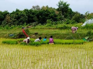 10 Profesi Pertanian yang Wajib Anda Tau, Ternyata Keren Juga Loh!