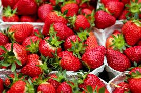 fraise, petit fruit pour grandes vertus