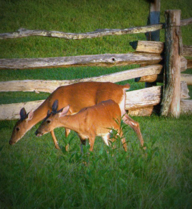 NC BACKCOUNTRY: WILDLIFE