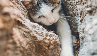 fakta mencengangkan tentang kucing