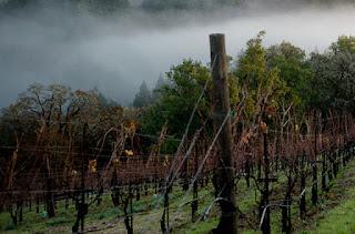 Misty vineyard rows.