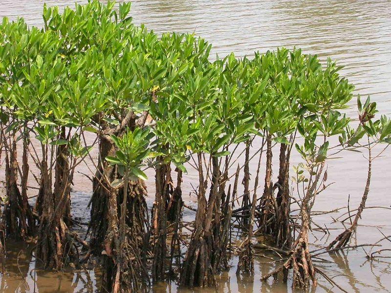 pencegahan kerusakan ekosistem laut