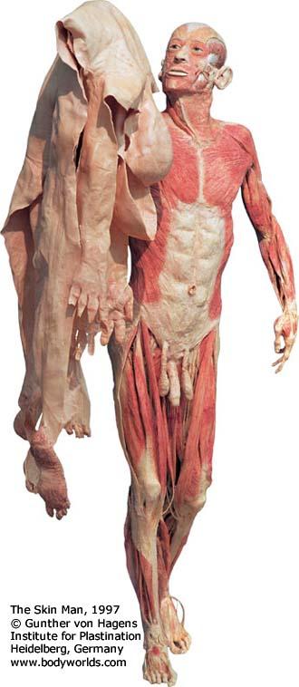 The Skin Man