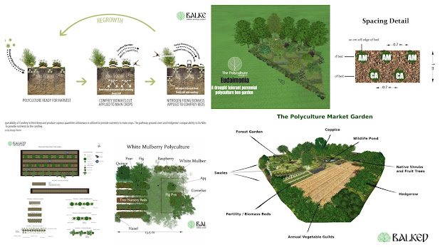 How to Design and Build A Forest Garden - Webinar