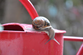 A snail on a red watering can.