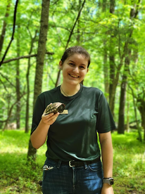 Rebekah Wofford, in the woods wearing a dark green shirt, holding a turtle that will have data collected for the Box Turtle Connection project.
