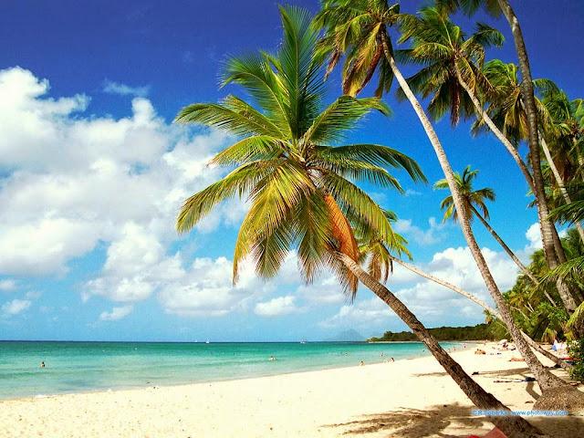 Plage de Grande Anse en Martinique avec Cocotiers