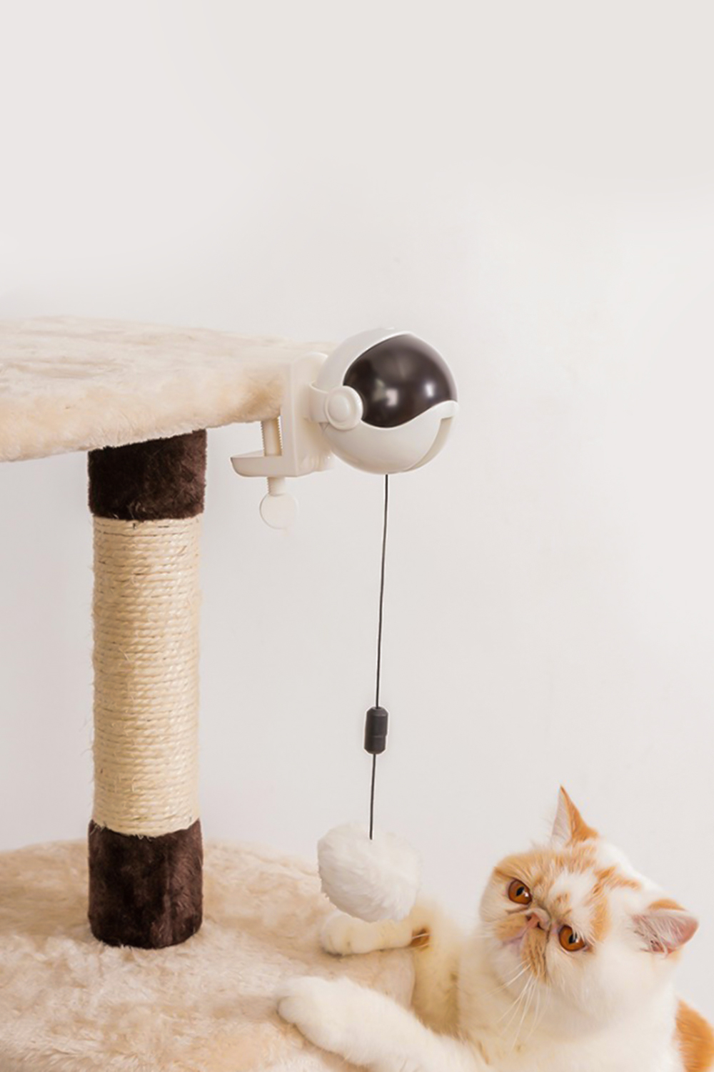 cat is playing with a toy