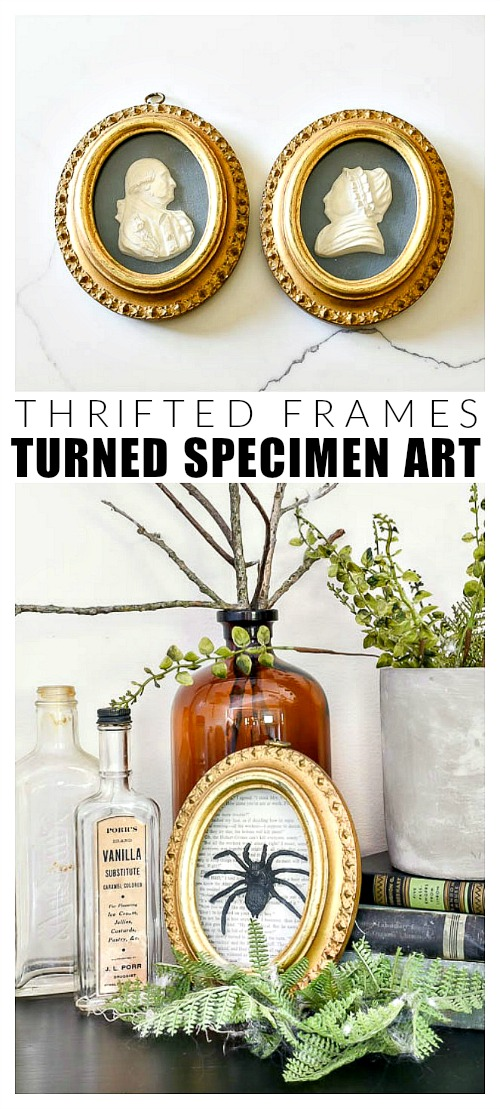 How to make vintage inspired specimen art