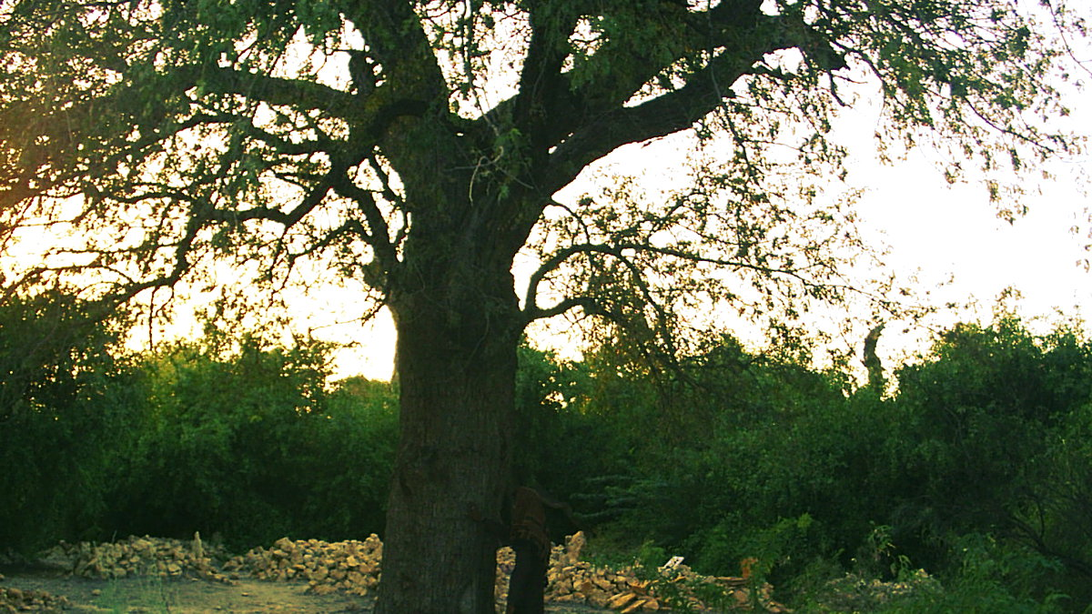 The spooky uparkot fort junagadh gujarat - There Is A Tree In This Locality Which Has Acquired The Status Of Being Haunted And It Is Said That If A Man Goes Close To This Tree During Night Time