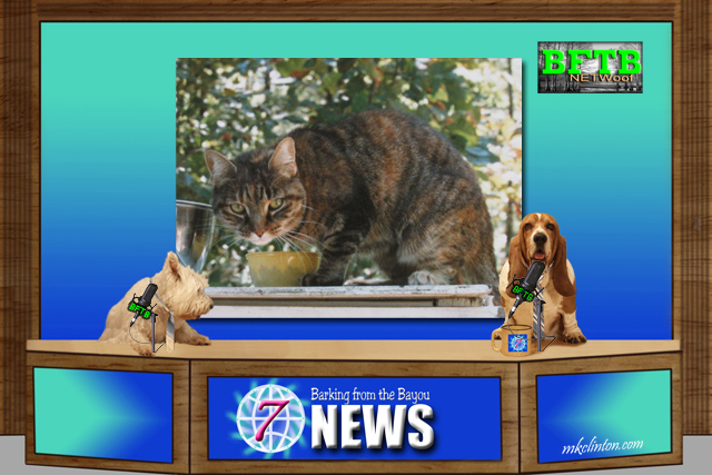 BFTB NETWoof News set with dog anchors