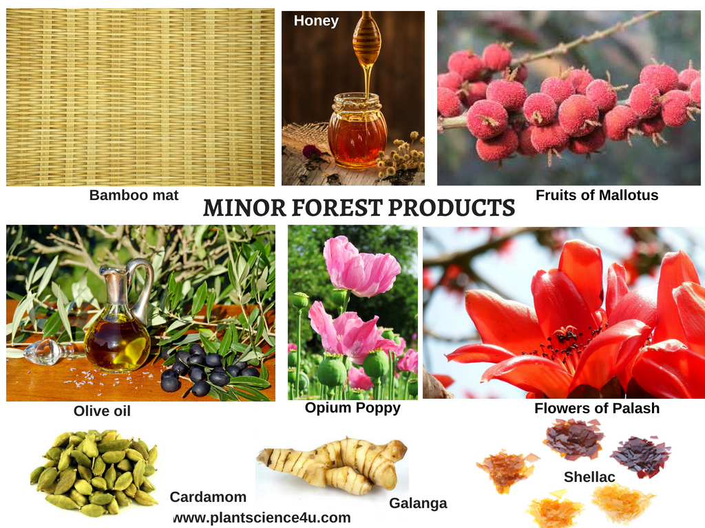15 forest products and their uses · 1. 10 Minor Forest Products Mfps