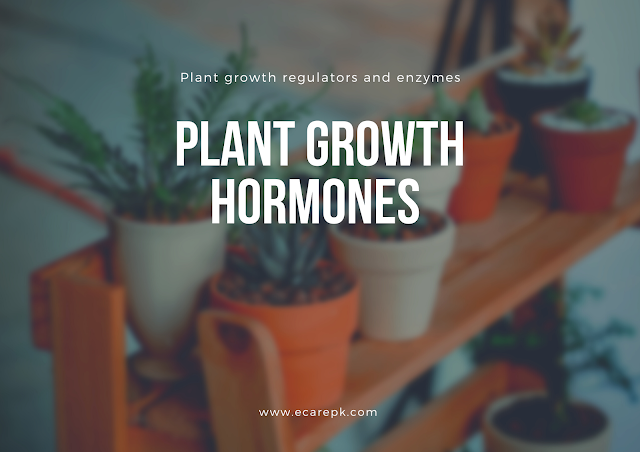 Plant Growth Hormones and Plant Growth Regulators and Enzymes