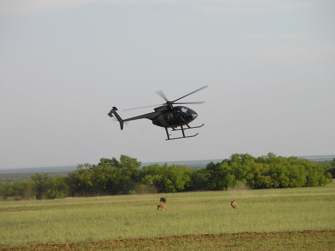 The Porkchopper Aerial Hunting Of Feral Hogs Wild Wonderings
