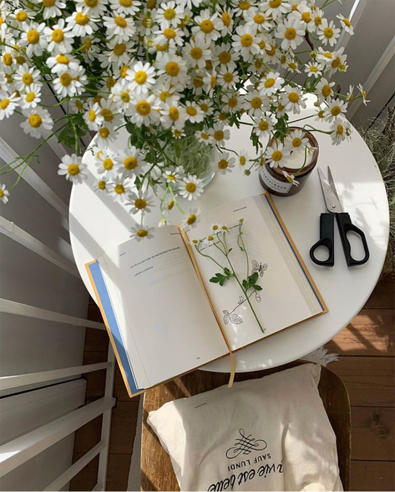 Compilation | Late-Spring Inspiration: Coming Up Daisies