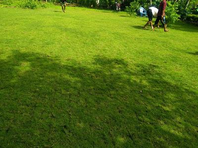 Cara Mudah Menyuburkan Rumput Jepang
