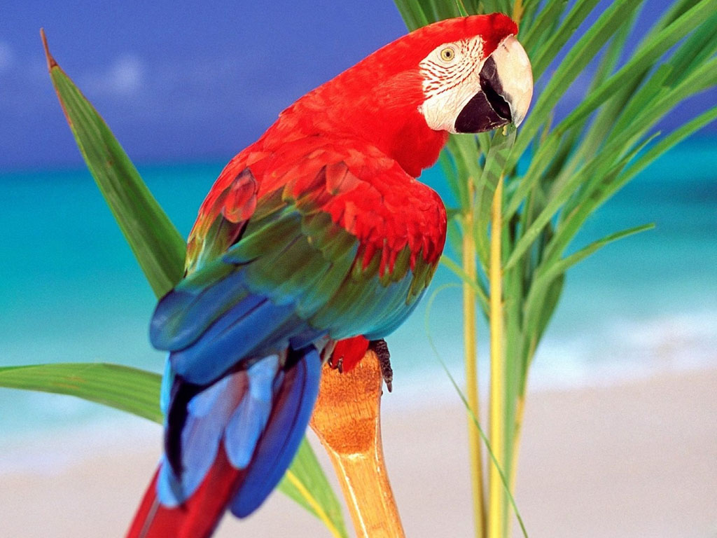 All new wallpaper  Gambar Wallpaper Burung Tercantik