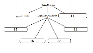 حل اسئلة الفصل السادس ( التكاثر الخلوي )