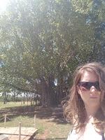 Mataranka | Banyan Tree