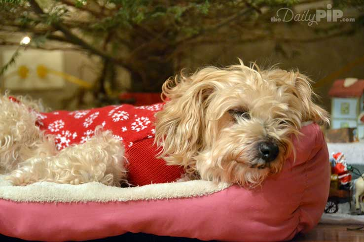 4 gifts for pet blog hop and giveaway (bed not included)