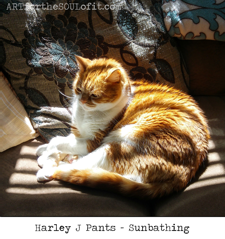 harley j pants sunbathing cat photo by joanie springer