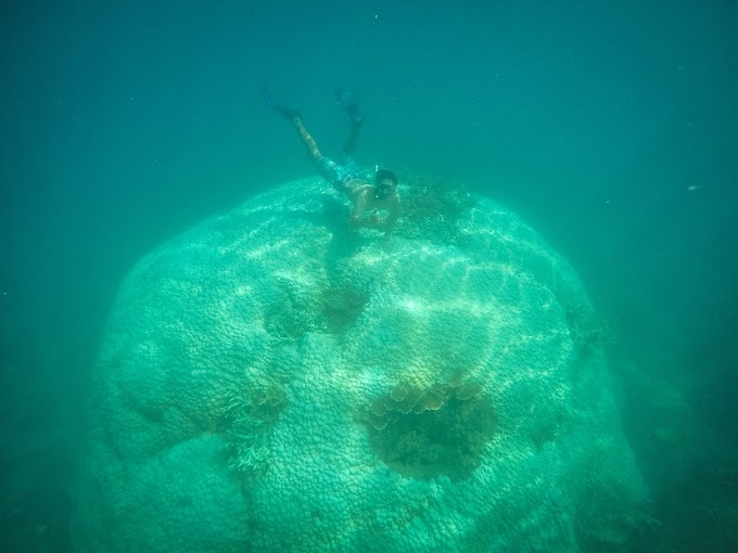 Giant coral block a secretive Con Dao treasure