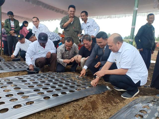 Bupati Bangga,Investor Bantu Peningkatan Perekonomian Masyarakat Taput Melalui Pengembangan Bawang Putih