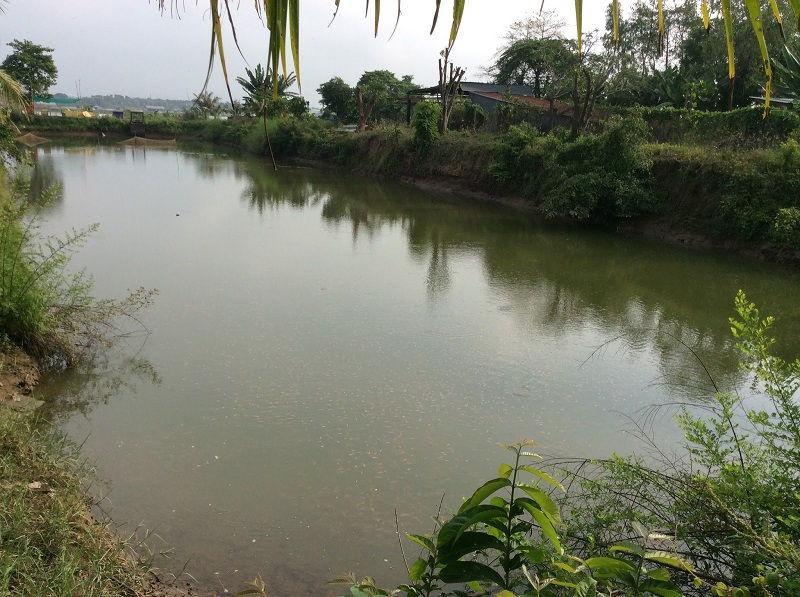 Lokasi Kolam Tanah yang Mendukung Untuk Pembesaran Ikan Nila
