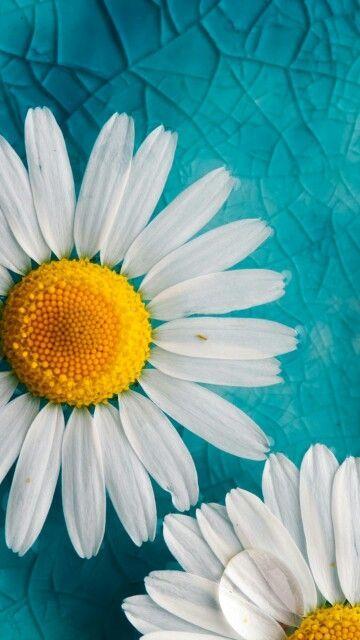 خلفيات جول زهور عالية الدقة