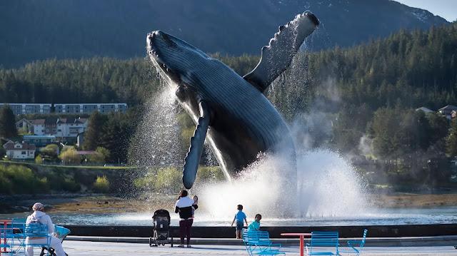 The best Tourist Attractions in Juneau, Alaska