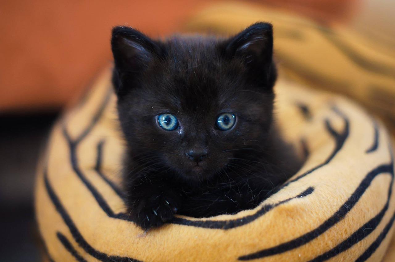 Gambar Kucing Lucu Buat Wallpaper Majalah Cat & Dog