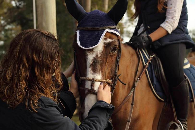 Ask a Farrier: When Buying a Horse, How Can I Tell If It Has Good Feet?