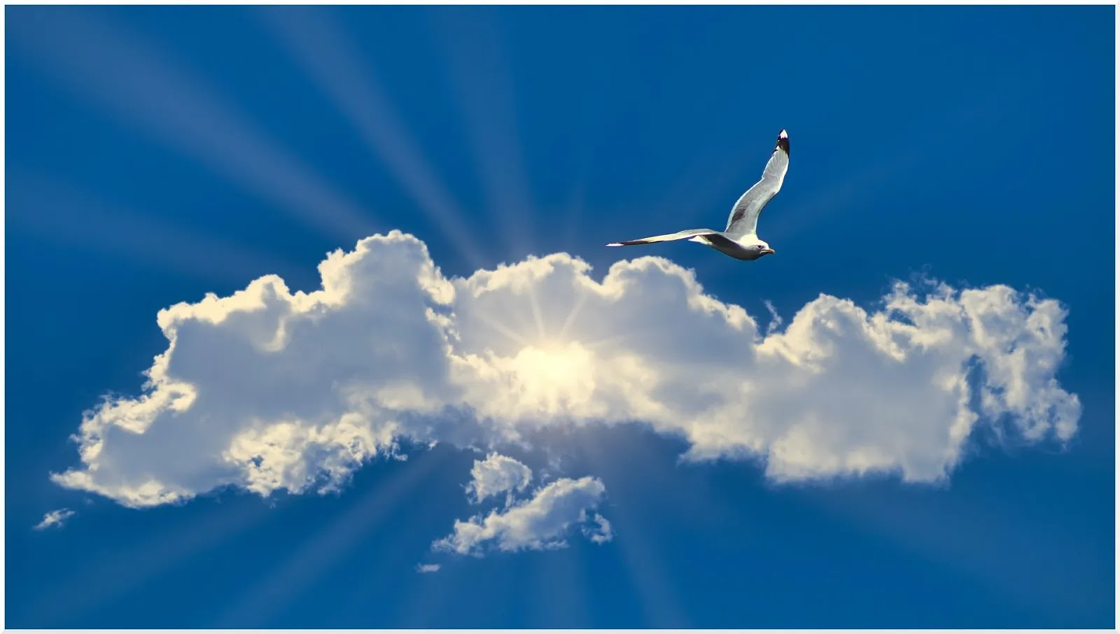 حصريا خلفيات كمبيوتر بأعلي جودة للطيور والسماء