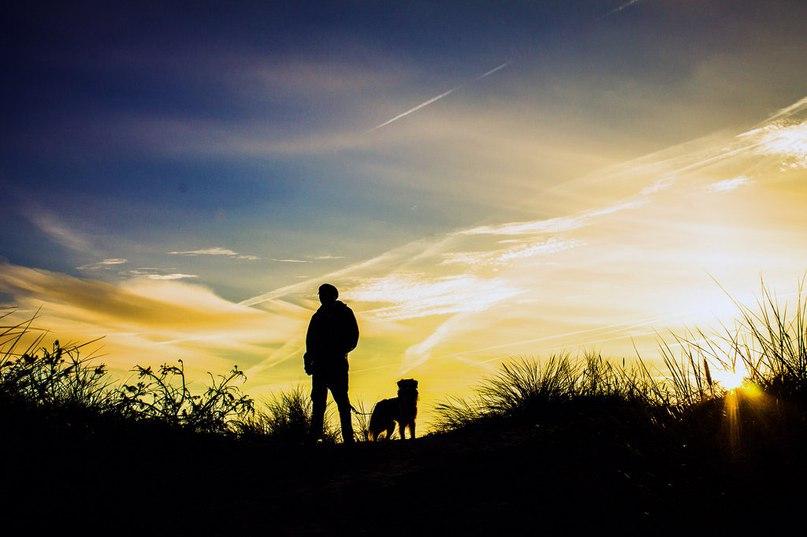Все о братьях наших меньших: 15 качеств настоящего собачника