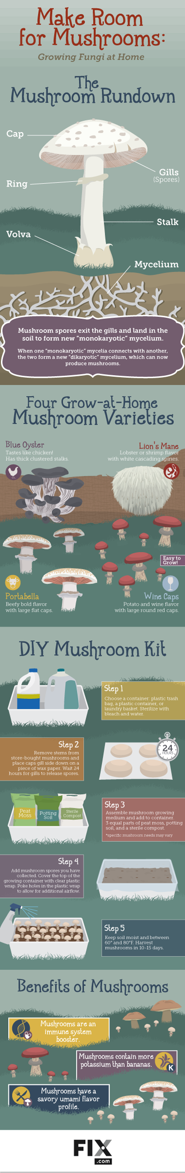 How to Grow Mushrooms at Home? a DIY Guide