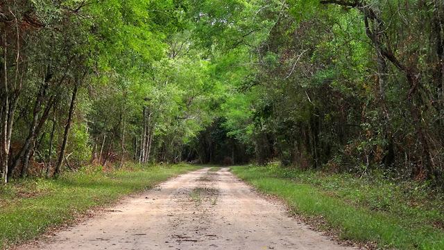 Argentina perdió 6,5 millones de hectáreas de bosques nativos en 20 años
