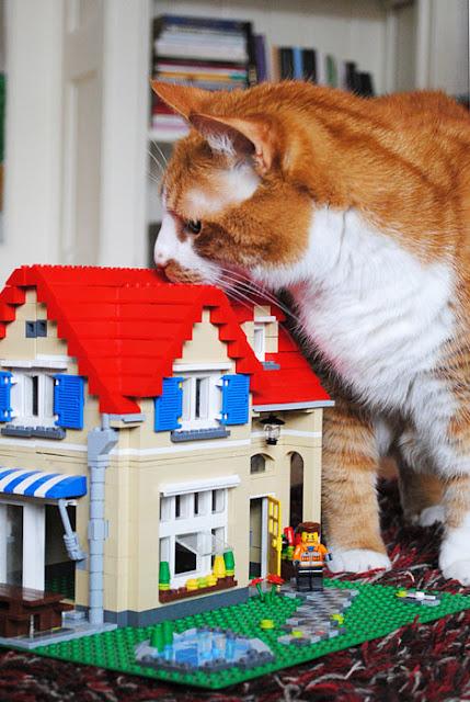 Een villa van lego met een rood dak wordt besnuffelt door een grote rode kat.