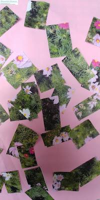 photo de fleurs à imprimer collage de fleurs collage d'été