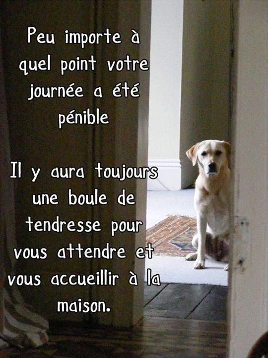 Citations option bonheur citation sur les chiens for As tu un animal a la maison