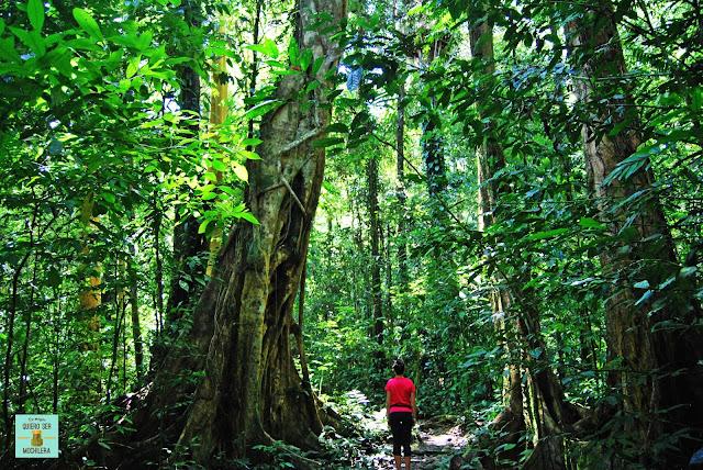 Parque Nacional del Gunung Mulu (Borneo, Malaysia)