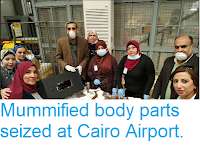 https://sciencythoughts.blogspot.com/2019/03/mummified-body-parts-seized-at-cairo.html
