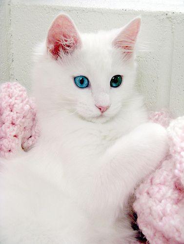 Unduh 97+  Gambar Kucing Yang Lucu Dan Cantik Terbaru